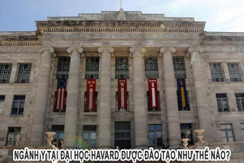 Ngành Y tại Đại học Havard được đào tạo như thế nào?