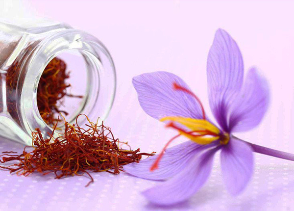 """Saffron – nhụy hoa nghệ tây có phải là """"thần dược"""" như bạn nghĩ?"""