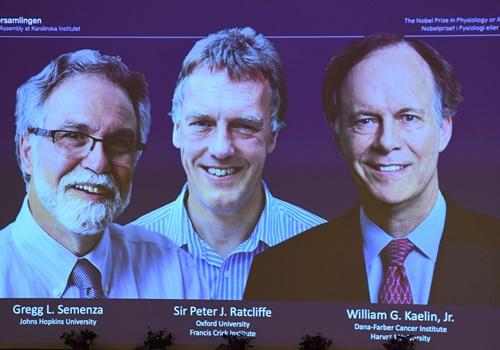 3 nhà khoa học về khám phá tế bào được nhận giải Nobel Y học 2019